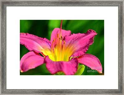 Lovely  Lilly Framed Print