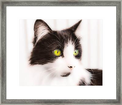Lovely Little Kitten Framed Print