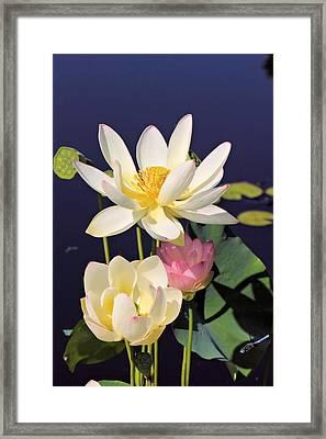 Lovely Lotus Framed Print