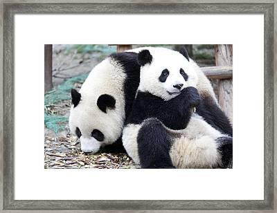 Lovely Pandas Framed Print by King Wu