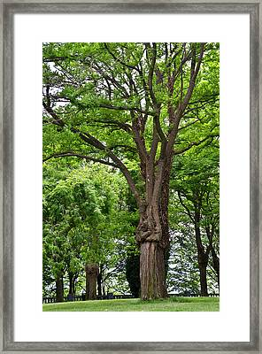 Lovely Park Featuring Giant Trees Framed Print by Jan and Stoney Edwards