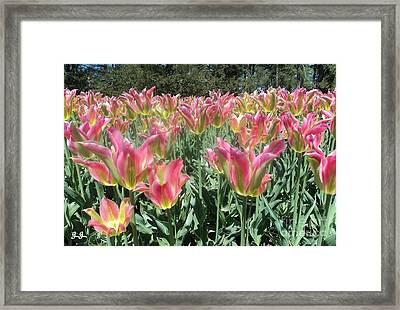 Lovely Petals Framed Print by Geri Glavis