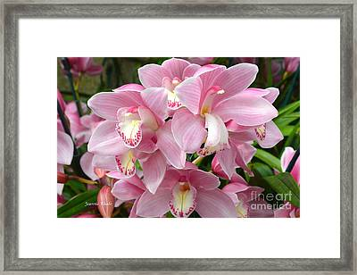 Framed Print featuring the photograph Cymbidium Pink Orchids by Jeannie Rhode