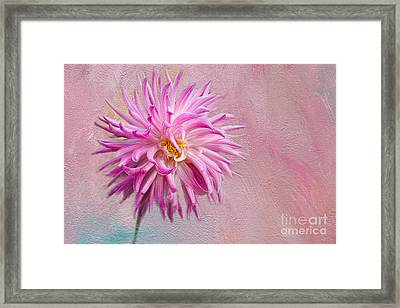 Lovely Pink Dahlia Framed Print