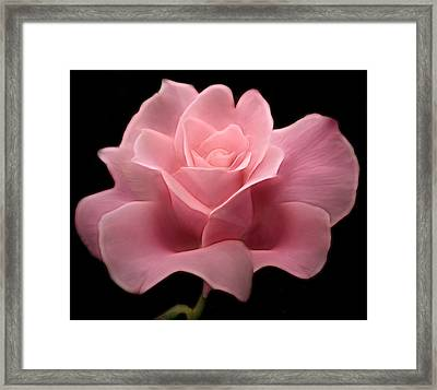 Framed Print featuring the digital art Lovely Pink Rose by Nina Bradica