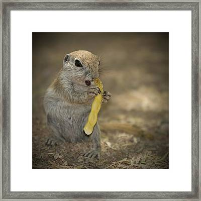 Lovely Prairie Dog Framed Print by Melanie Viola