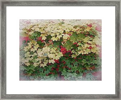 Lovely Red Brick Wall Framed Print