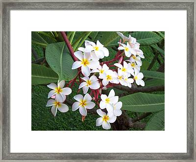 Framed Print featuring the photograph Lovely by Sheila Byers
