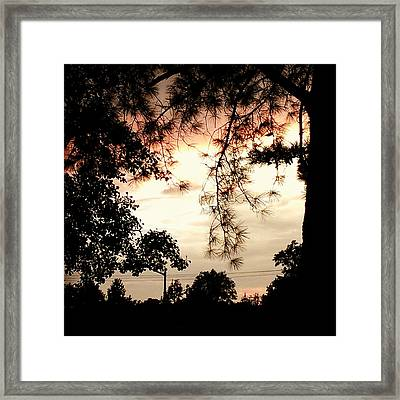 Framed Print featuring the photograph Lovely by Thomasina Durkay