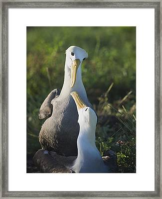 Lovers Gaze At Each Other Framed Print by Richard Berry