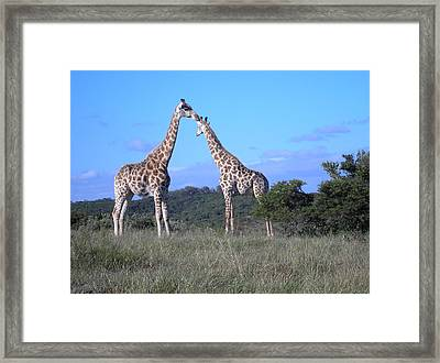 Lovers On Safari Framed Print