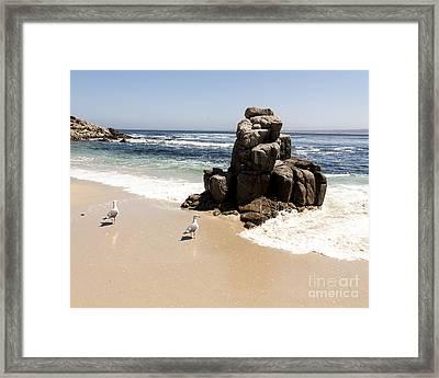 Lovers Point Seagulls Framed Print by Juan Romagosa