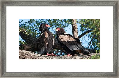 Lovers Quarel Framed Print by David Yack