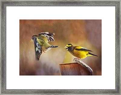 Lovers Quarrel Framed Print