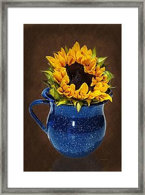 Loving A Sunflower Framed Print by Phyllis Denton