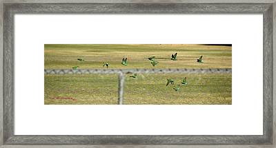 Framed Print featuring the photograph Loving It Up At Crossed Arrows Park by R B Harper