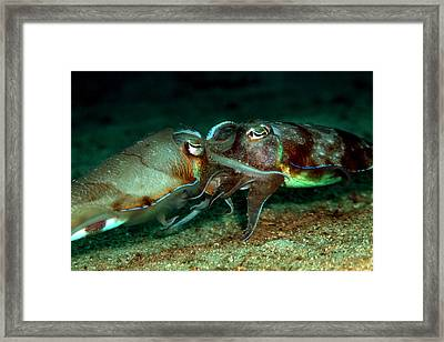 Loving Moments Framed Print by Sok wan andy Yeo