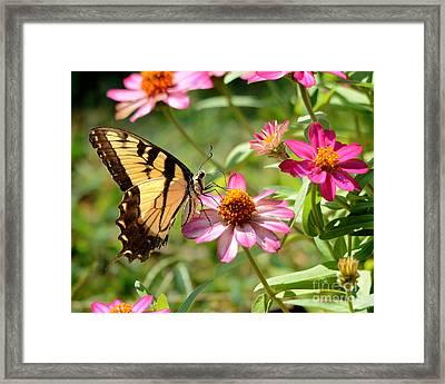 Loving Summer Garden Framed Print by Nava Thompson