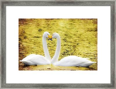 Loving Swans Framed Print by Tommytechno Sweden