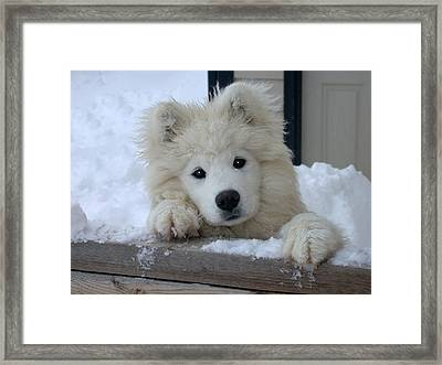 Loving The Snow Framed Print