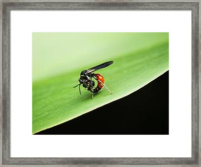 Lovingly Held Framed Print
