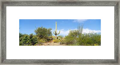 Low Angle View Of A Cactus Among Framed Print by Panoramic Images