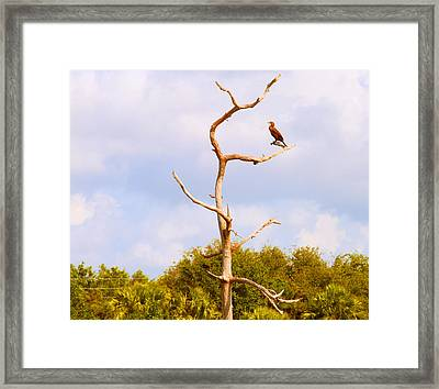 Low Angle View Of A Cormorant Framed Print by Panoramic Images