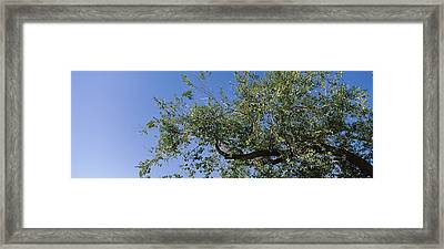 Low Angle View Of A Tree Branch Framed Print by Panoramic Images