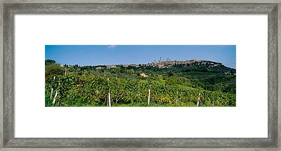 Low Angle View Of A Vineyard, San Framed Print by Panoramic Images