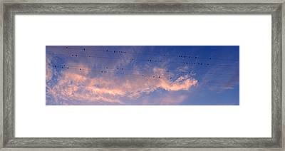 Low Angle View Of Birds Perching Framed Print