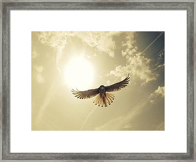 Low Angle View Of Eagle Flying Framed Print by David Hernandez / Eyeem