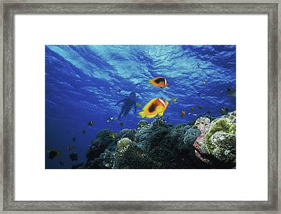 Low Angle View Of Fish Undersea Framed Print