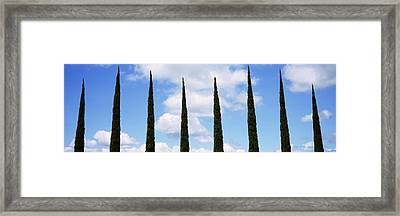 Low Angle View Of Leafless Palm Tree Framed Print by Panoramic Images