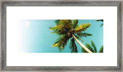 Low Angle View Of Palm Tree, Morro De Framed Print by Panoramic Images