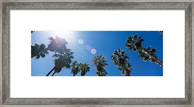 Low Angle View Of Palm Trees, Downtown Framed Print by Panoramic Images