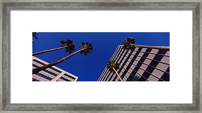Low Angle View Of Palm Trees In Front Framed Print