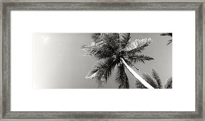 Low Angle View Of Palm Trees, Morro De Framed Print by Panoramic Images