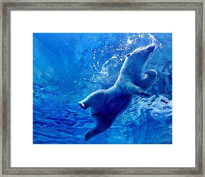 Low Angle View Of Polar Bear Swimming Framed Print by Yumeng Lin / Eyeem