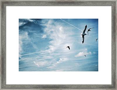 Low Angle View Of Seagulls Flying Framed Print by Mark Mwamba / Eyeem