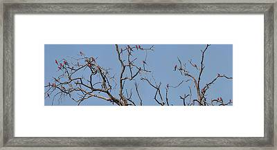 Low Angle View Of Southern Carmine Framed Print by Panoramic Images