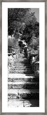 Low Angle View Of Steps In A Garden Framed Print