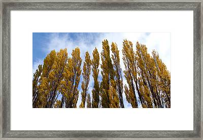 Low Angle View Of Trees, Aspens Framed Print by Panoramic Images