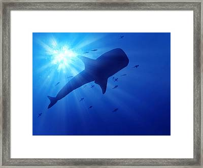 Low Angle View Of Whale Swimming In Sea Framed Print by Stijn Dijkstra / Eyeem