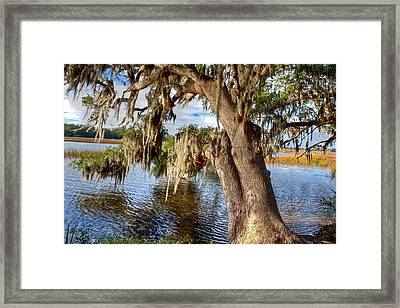 Low Country Creek Framed Print
