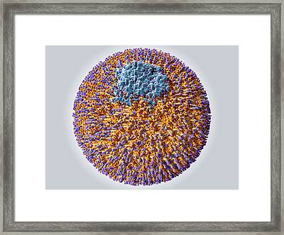 Low Density Lipoprotein Particle Framed Print