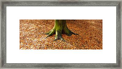 Low Section View Of A Tree Trunk Framed Print by Panoramic Images