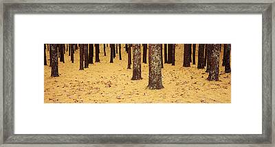 Low Section View Of Pine And Oak Trees Framed Print
