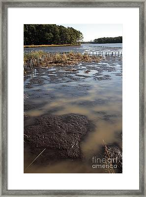 Low Tide At Blackwater Wildlife Refuge In Maryland Framed Print