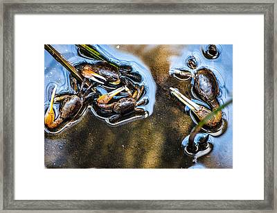 Low Tide Breakfast  Framed Print