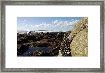 Low Tide Cabrillo National Monument Framed Print